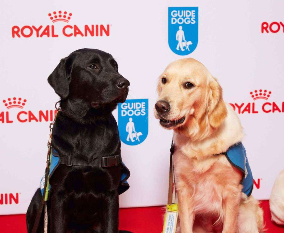 Guide Dogs Awards 2015 004